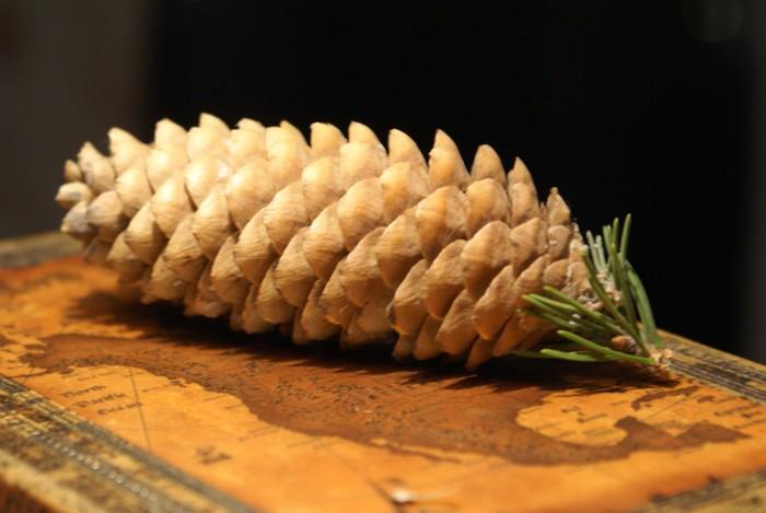 шишка и семена